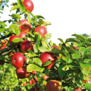 Fruchtsaft_frei